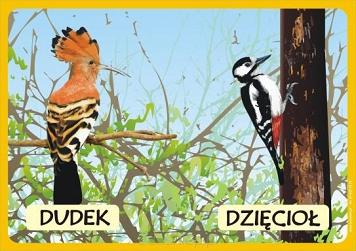 large_Zwierzeta-chronione-5-pudelek-z-puzzlami